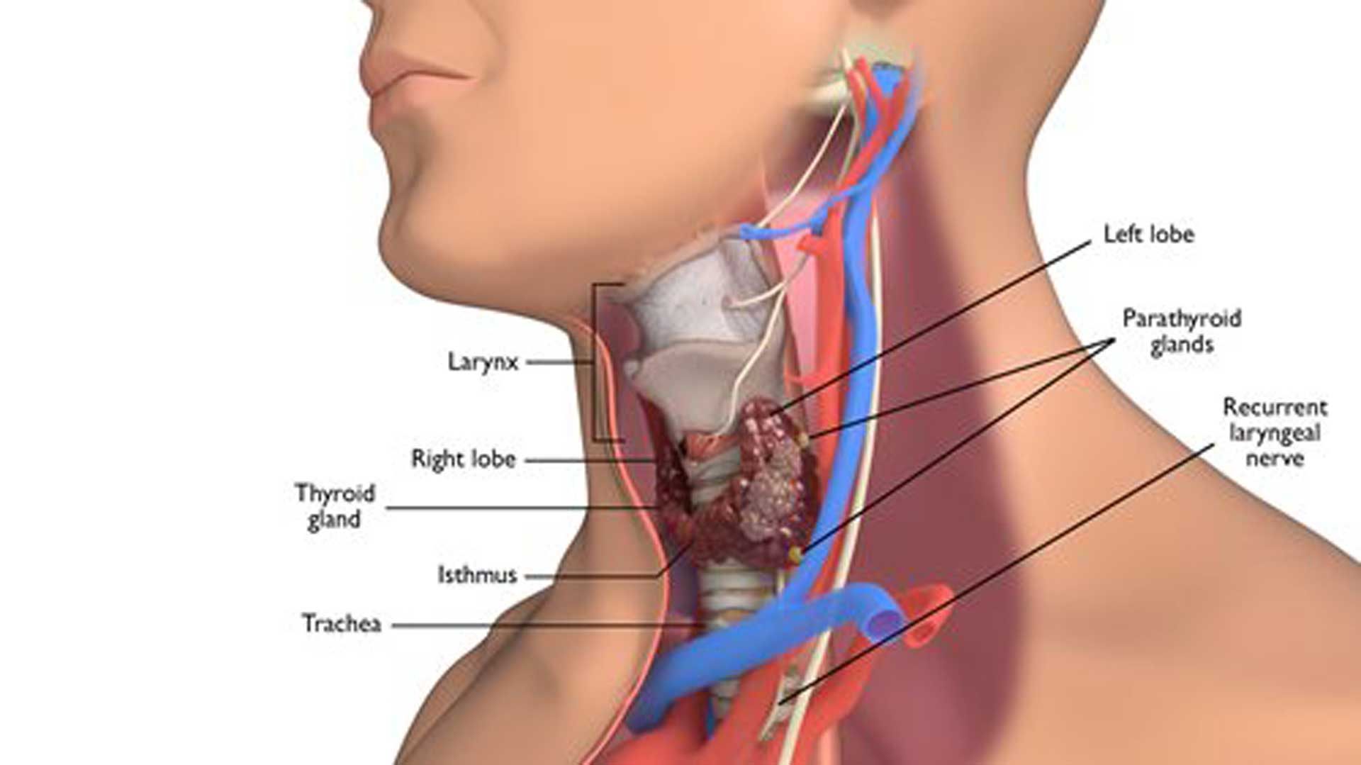 hypo thyroidism