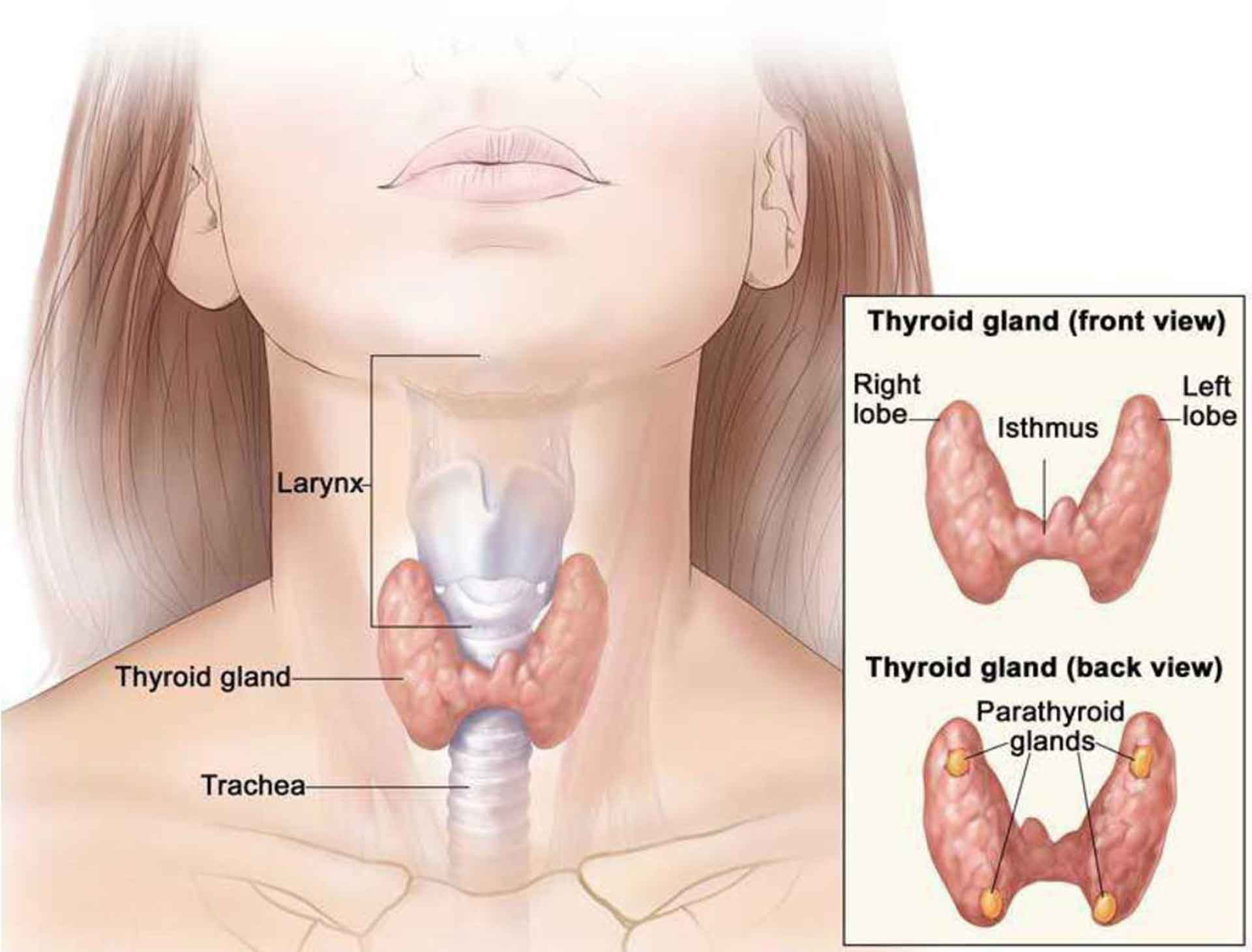 hyper thyroidism